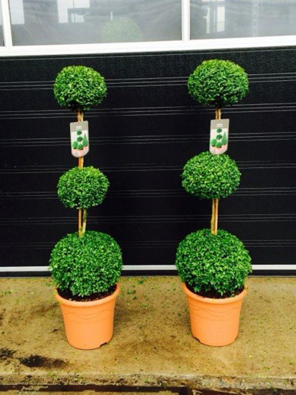 buxus_three_tier